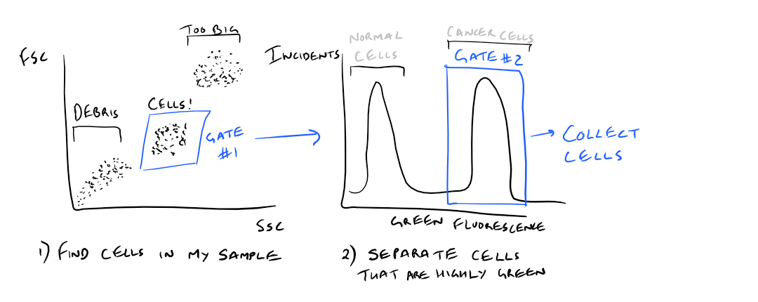 Gating in Flow Cytometry