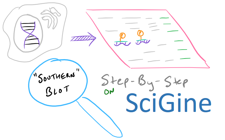 Southern blot scientific method title