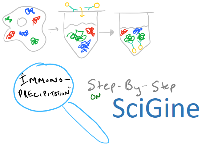 Immunoprecipitation Method Guide on SciGine