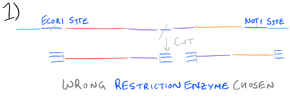 Gene cloning failure - wrong restriction enzyme